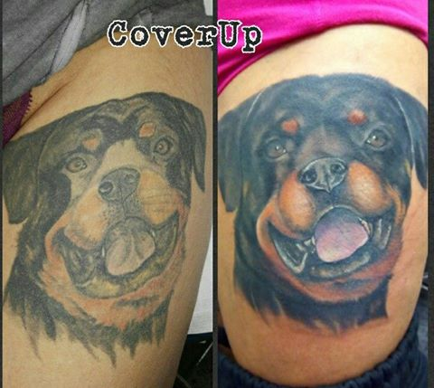 rottweiler tattoo cover up
